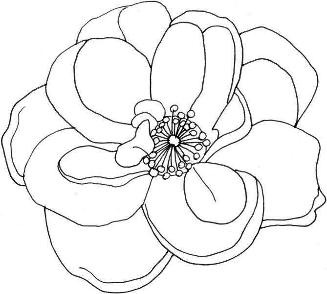 Ausmalen Ausmalbild Blumen Bluten