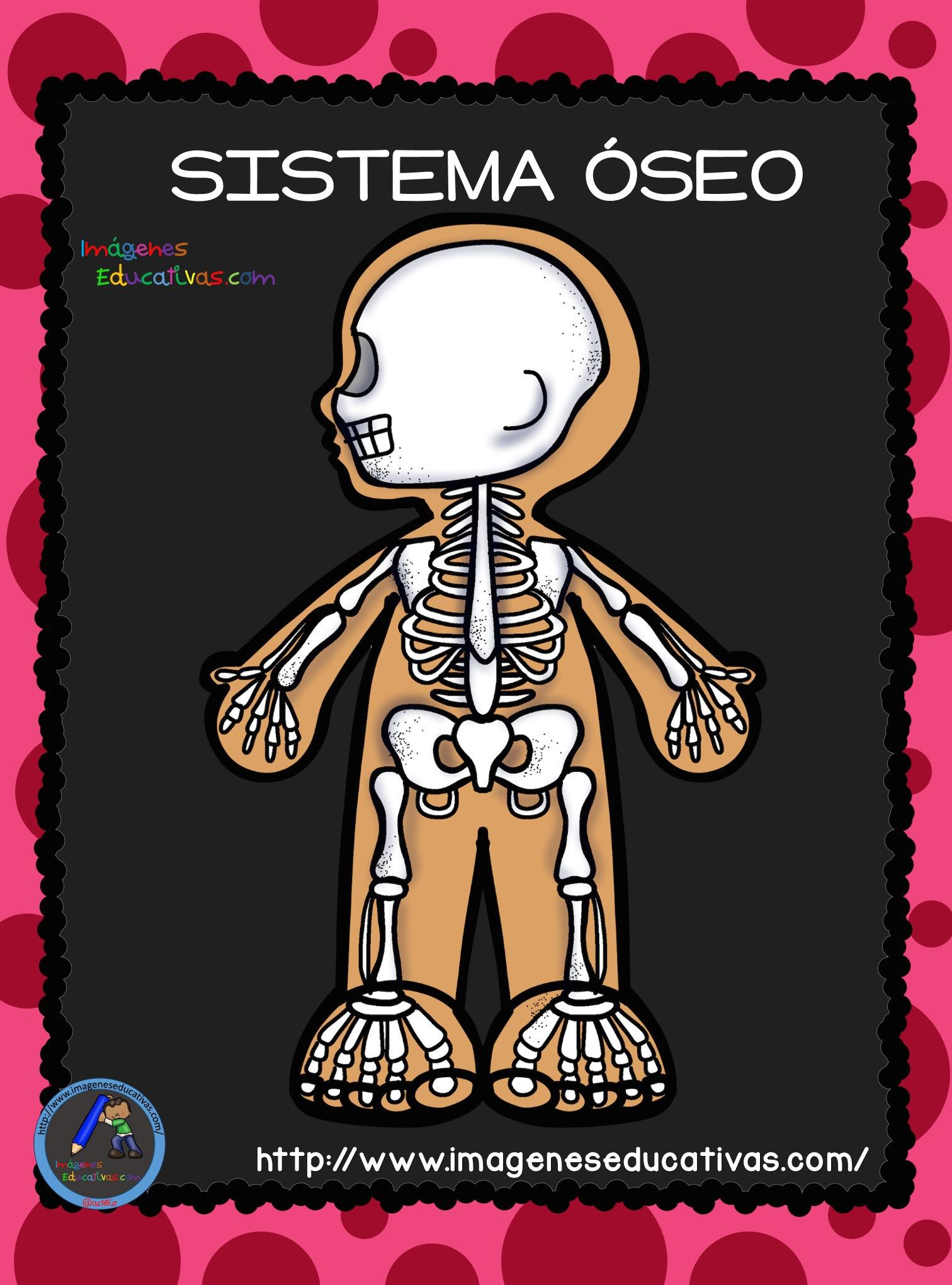 El Cuerpo Humano; Aparatos y Sistemas para Primaria Moldes
