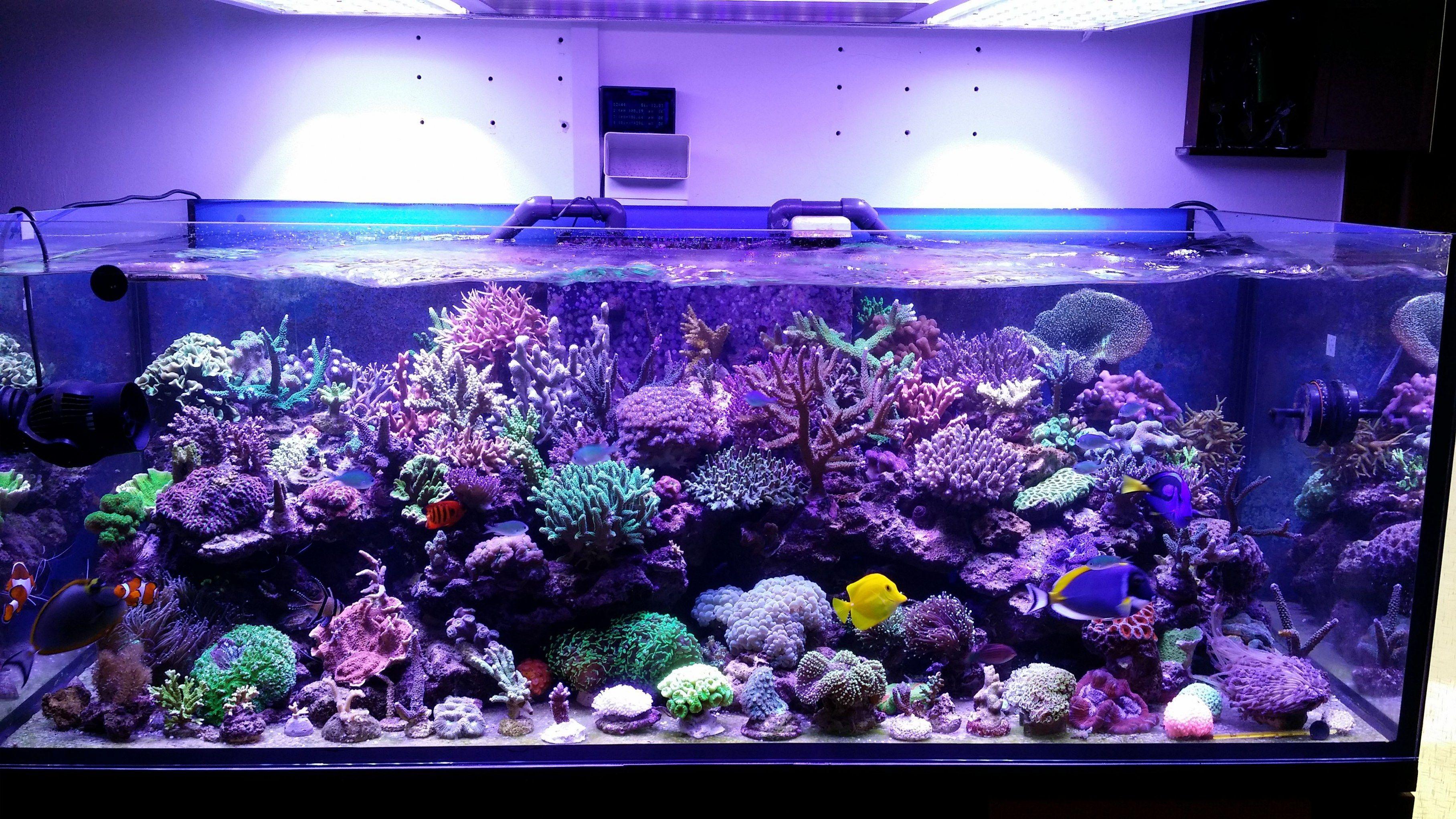 This Custom Led Has The Spectrum To Grow Massive Corals Read More About This Modification Marine Led Lights Led Aquarium Lighting Aquarium Lighting