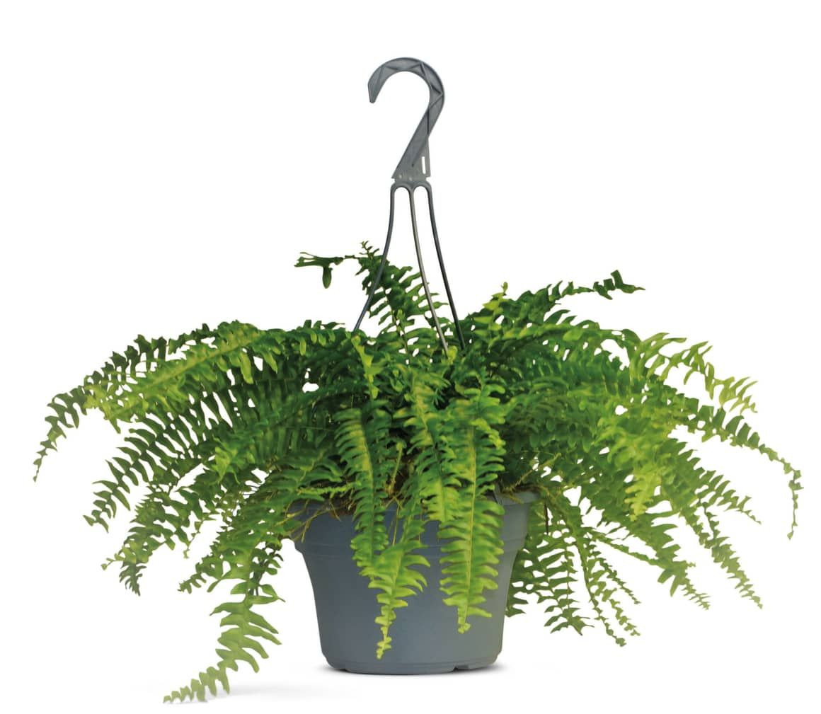 Calling All Plant Parents Aldi Is Selling Hanging Plant 400 x 300