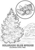 Colorado State Tree Coloring Page Tree Coloring Page Coloring