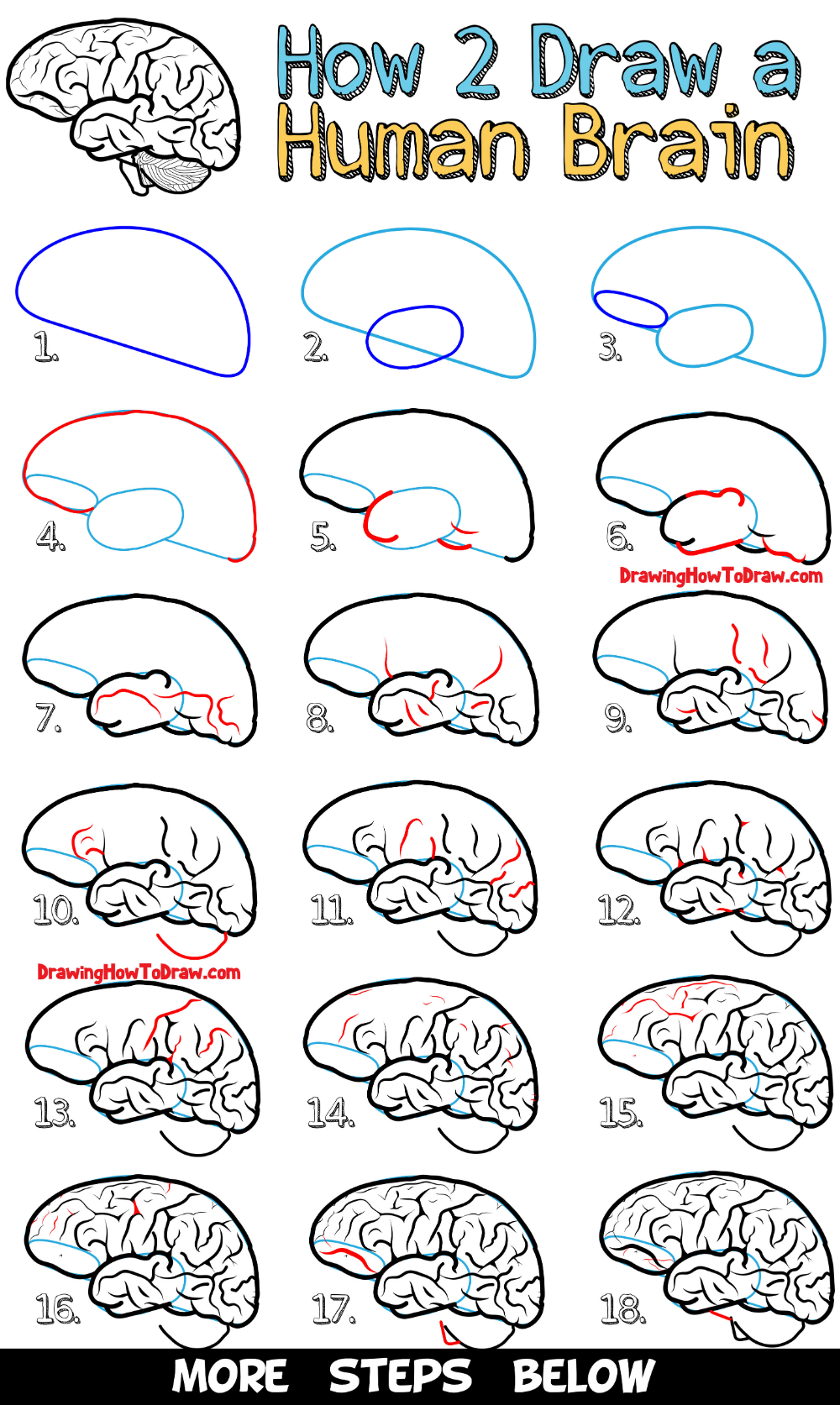 How to Draw a Human Brain - Easy Steps Drawing Lesson for Beginners - How to Draw Step by Step Drawing Tutorials