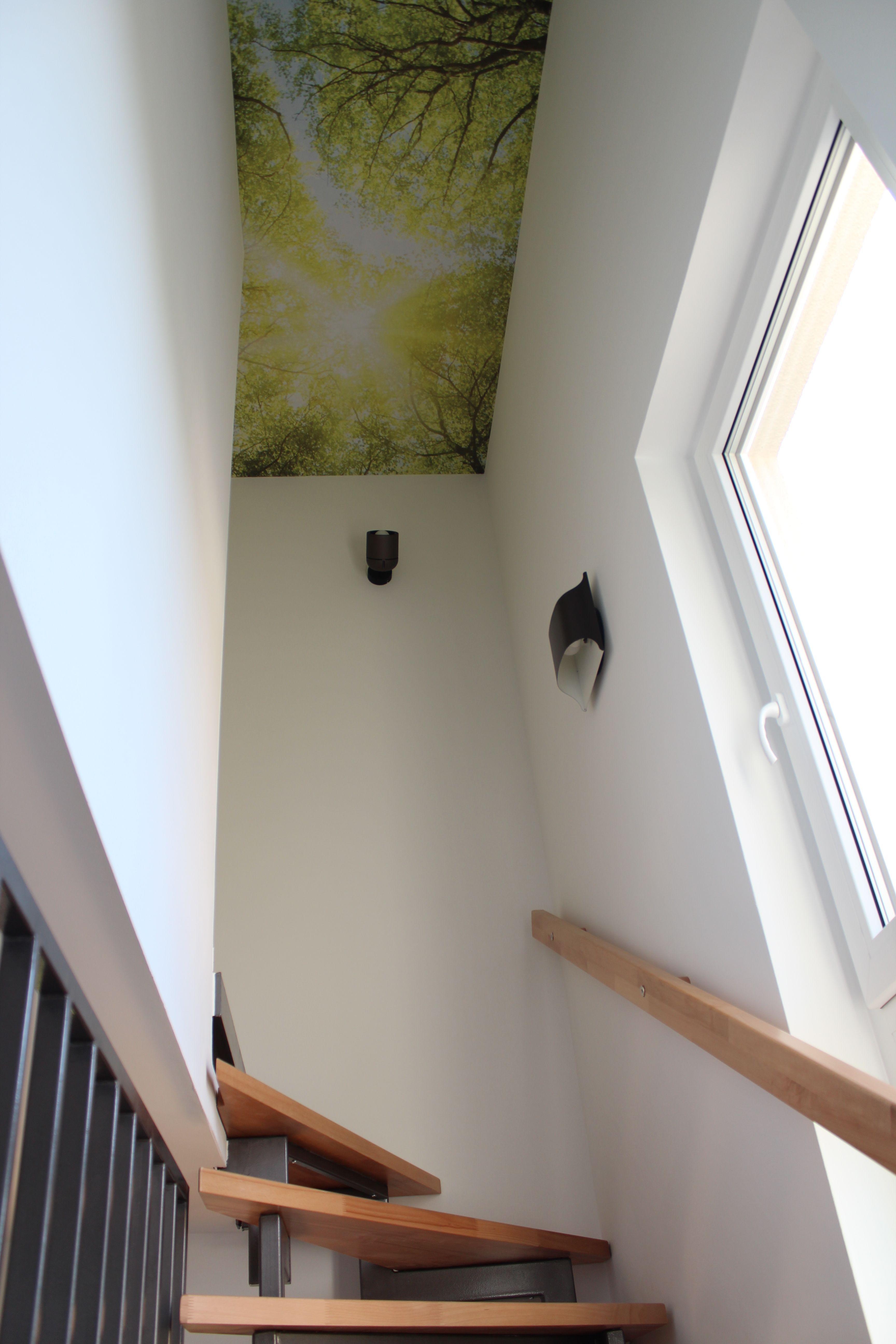 fototapete wald im treppenhaus home pinterest. Black Bedroom Furniture Sets. Home Design Ideas
