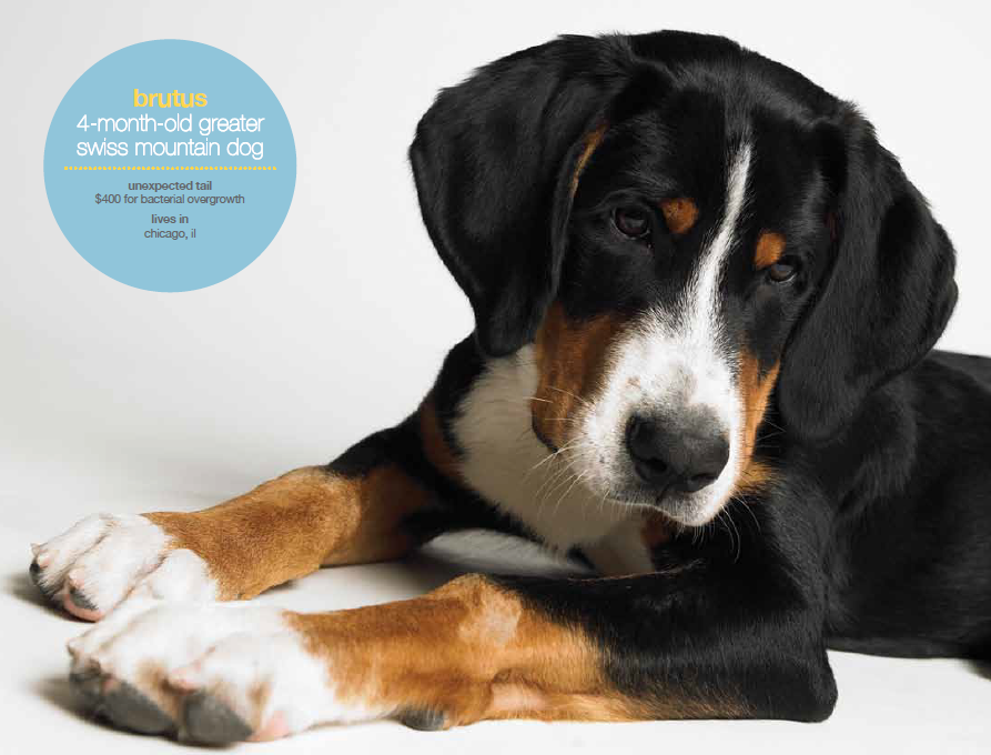 Petplan Pet Insurance Helps Protect Your Dog & Your Budget
