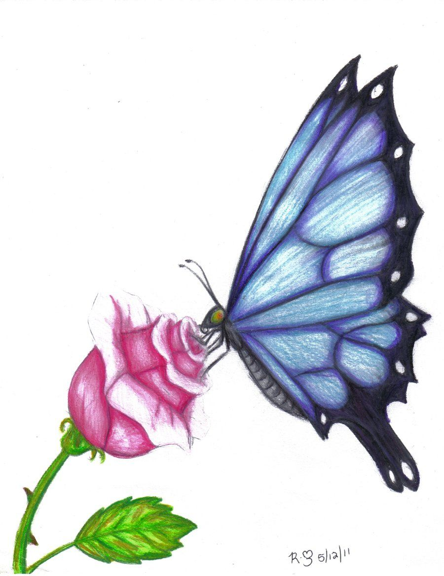 Butterfly drawings in color butterfly rose by evolra traditional art drawings animals 2011 2014