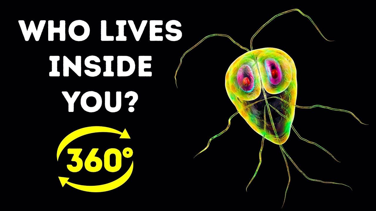 How Much Bacteria Is In Your Body 360 Vr Https Ift Tt 2novnph Youtube How Much Bacteria Is In Your Body 360 Vr Feeling Alone Body Healthy Man