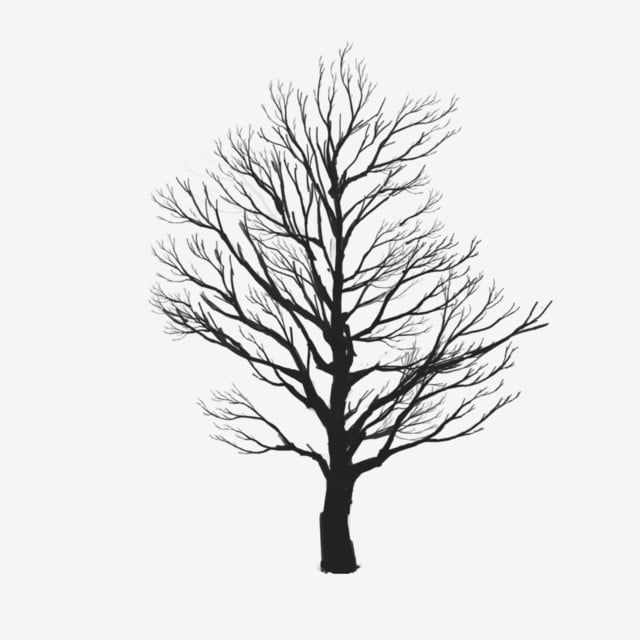 Tree Vector Clipart Tree Clipart Tree Png Vector Png Transparent Clipart Image And Psd File For Free Download Tree Photoshop Tree Clipart Art Background