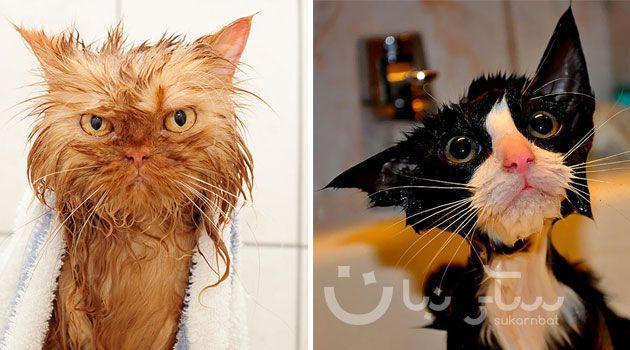 مجموعة مضحكة من 22 صوره لقطط مبللة Cats Animals