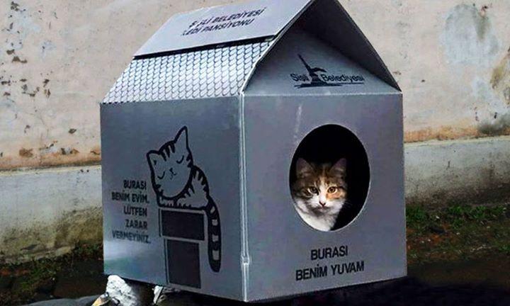 Casine Per Gatti Randagi In Turchia Facebook Hub Cat Gym Pets