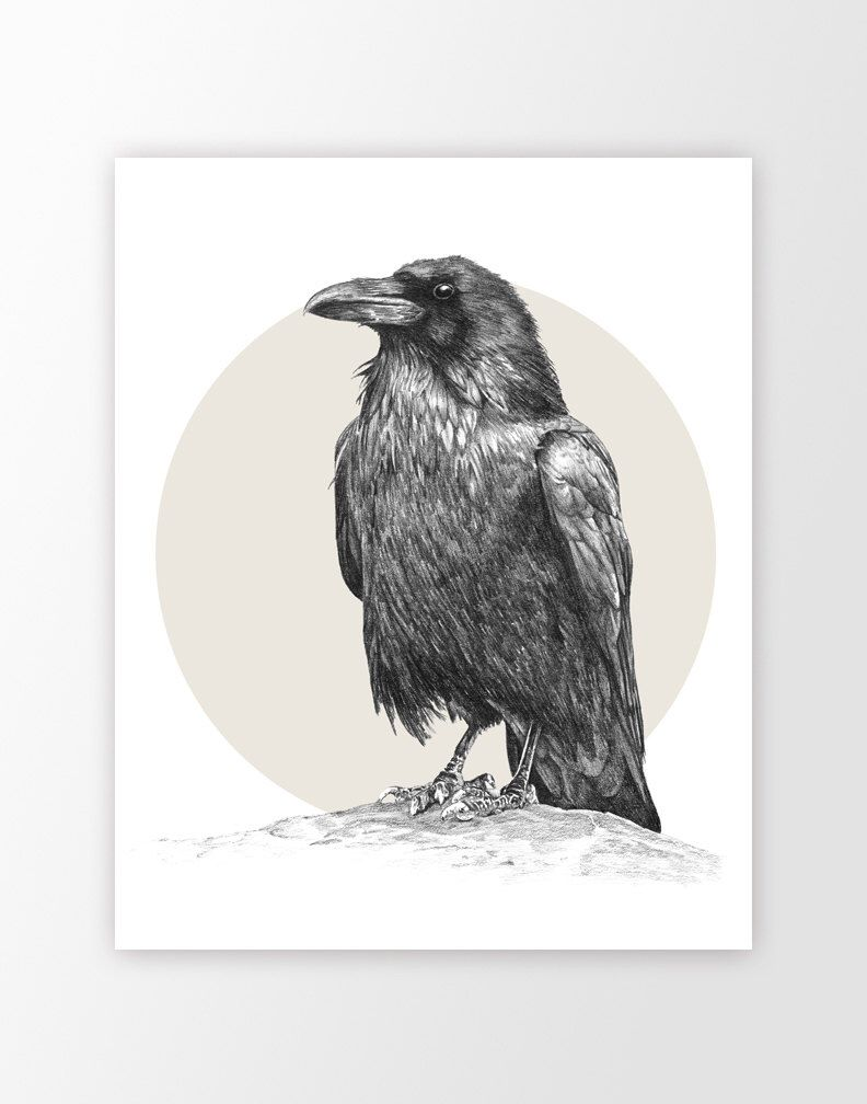 Pin by heather worthington on corvids pencil drawings raven art