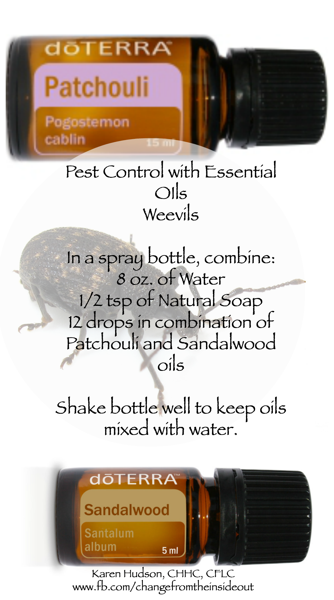 Weevils, nasty and truly a pest. Now, with essential oils of ...