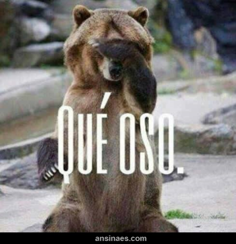 Fotos Chistosas De Osos Memes Funny Memes Mexican Jokes Y