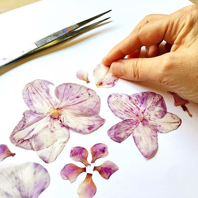 Yesterday I preserved flowers and today I harvest these petals that have been in the press for over a month. These are Brazilian orchids soon to become a painting, a story. I love this process of exploring each petal and sorting them in different ways for ideas of what they will become.  When the time comes for you to celebrate a new adventure with beautiful flowers, remember what they mean to you and all they could represent; they might just be the perfect token to keep for generations to…