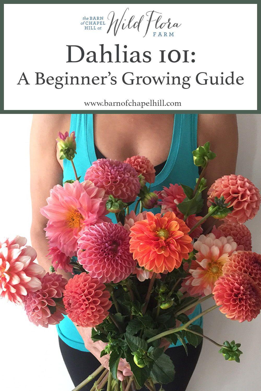 Dahlias 101 A Beginner's Growing Guide Flora farms