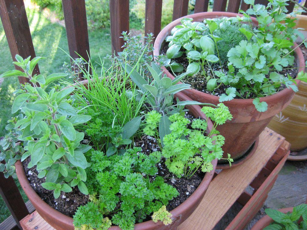 Plante ervas em seu apartamento