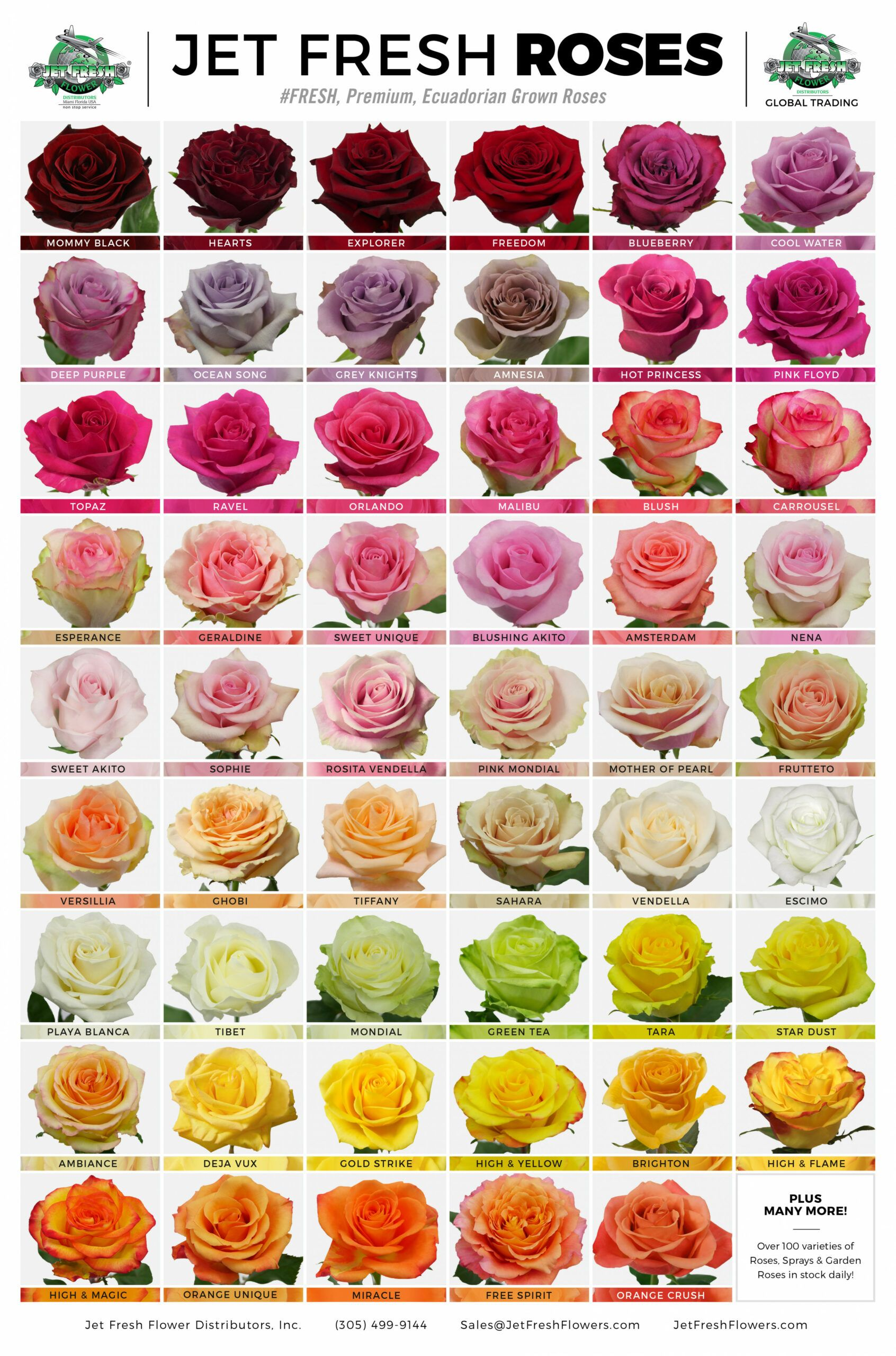 Ten Solid Evidences Attending Types Of Flowers Rose Is Good For Your Career Development Types Of Flowe Rose Varieties Beautiful Rose Flowers Types Of Flowers