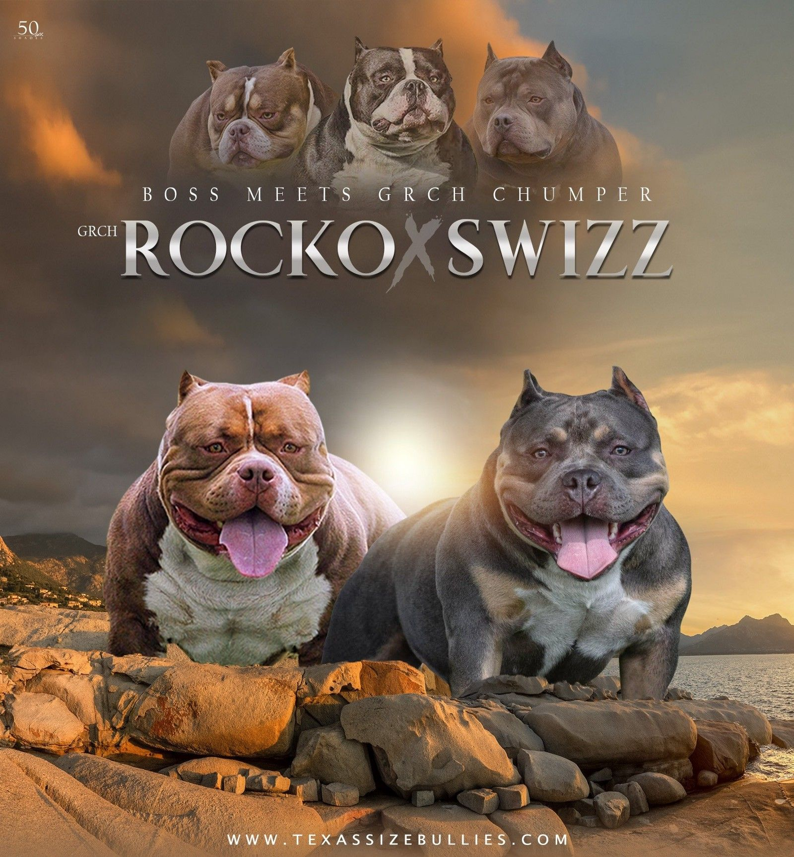 BEST POCKET BULLY PUPPIES FOR SALE American bully pocket