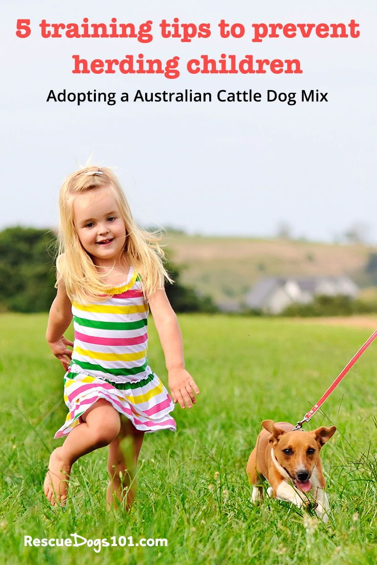 How to stop a dog from nipping ankles dogs kids dog