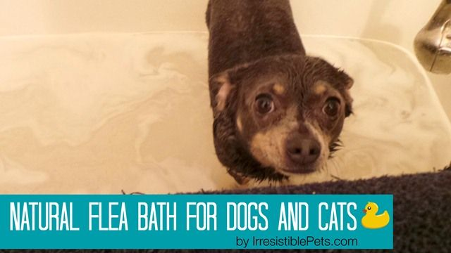 Natural Flea Bath For Dogs And Cats By Irresistiblepets Com Flea