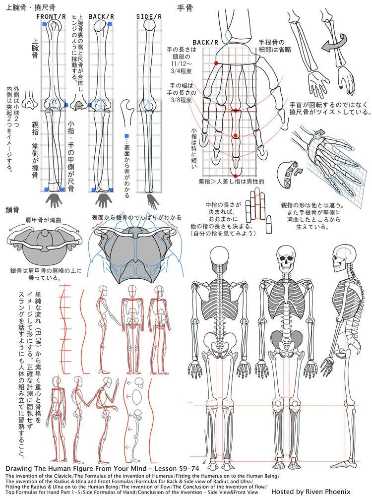 Pin von Nattapong Jatapai auf Anatomy | Pinterest