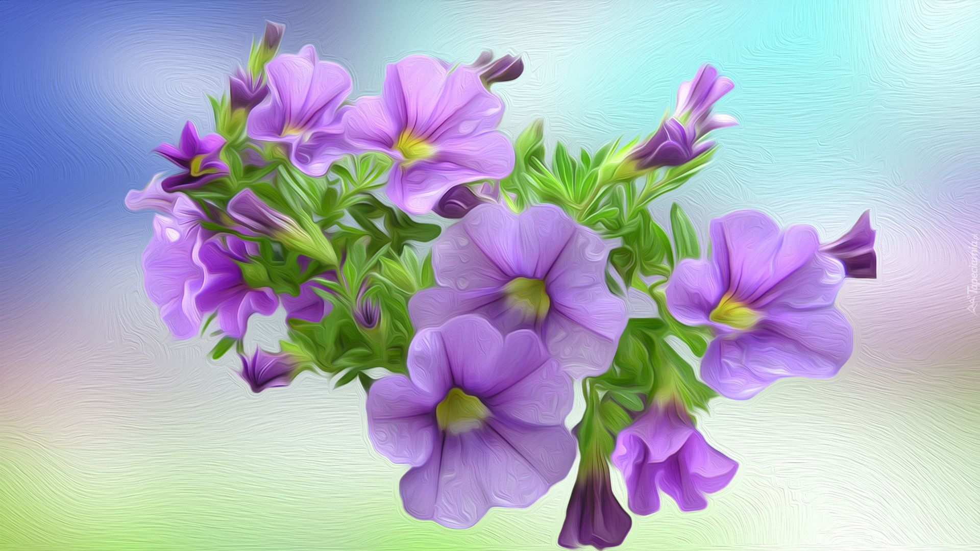 Https Www Tapeciarnia Pl Tapeta Petunie W Grafice Plants