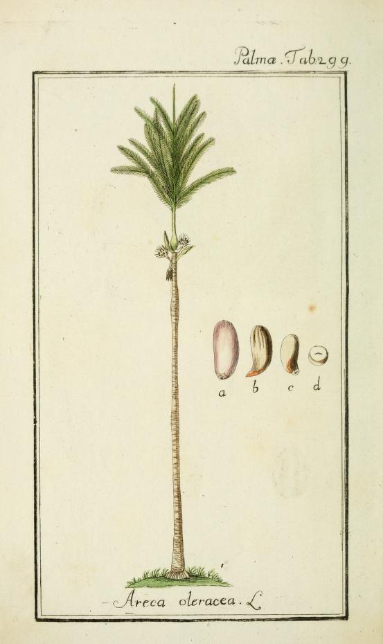 v.3 (tab 201-300, plates 201-300) - Dreyhundert auserlesene amerikanische Gewächse nach linneischer Ordnung. - Biodiversity Heritage Library