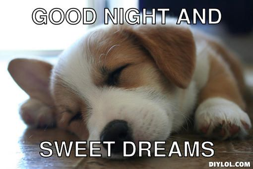 Good Night Sweet Dreams Dogs Good Night And Sweet Dreams Debbie