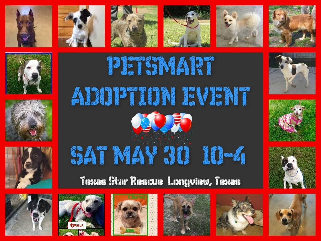 Texas Star Rescue Adoption And Donation Event Saturday May 30 10 4 Petsmart Longview Tx Adopt Your New Best Friend Dachshund Adoption Foster Dog Dog Adoption