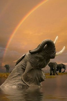 Miks Pics Animals V Board Http Www Pinterest Com Msmgish Animals V Animals Beautiful Elephant