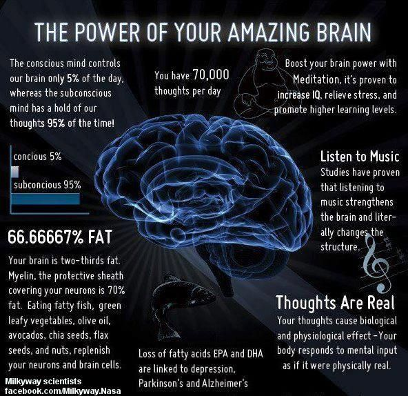 Your Brain | Pineal gland | Pinterest | Brain facts ...