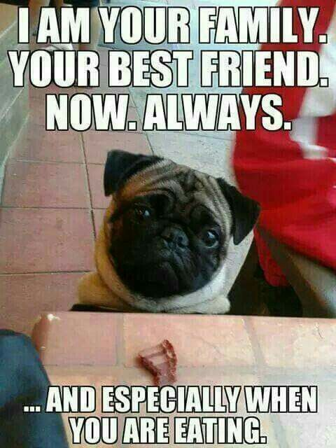 Especially Then Pug Quotes Pug Memes Pugs Funny