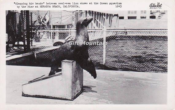 Vintage Postcard Ocean Aquarium Hermosa Beach California Seal