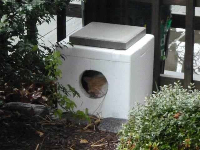 Simple outside cat house made from styrofoam cooler - fill with straw.  Cement stone weighs it down. Would be good to put a piece of plywood  between house ...