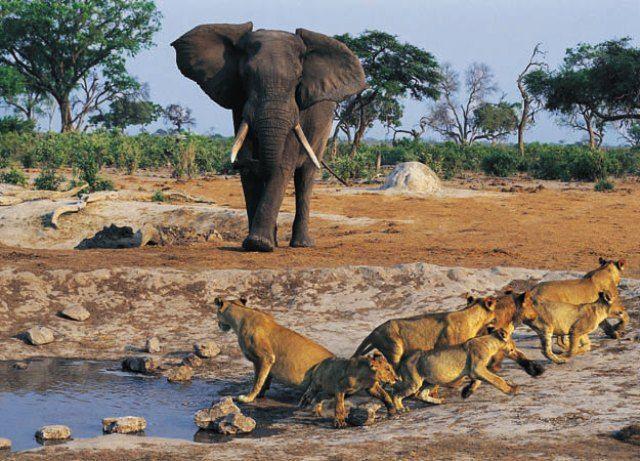 An Astonishing World Heritage Site – Niokolo Koba National Park | World heritage sites, National parks, Africa