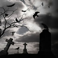 Crows Flying over Graves | Cemetery - closed in 2019 | Graveyard