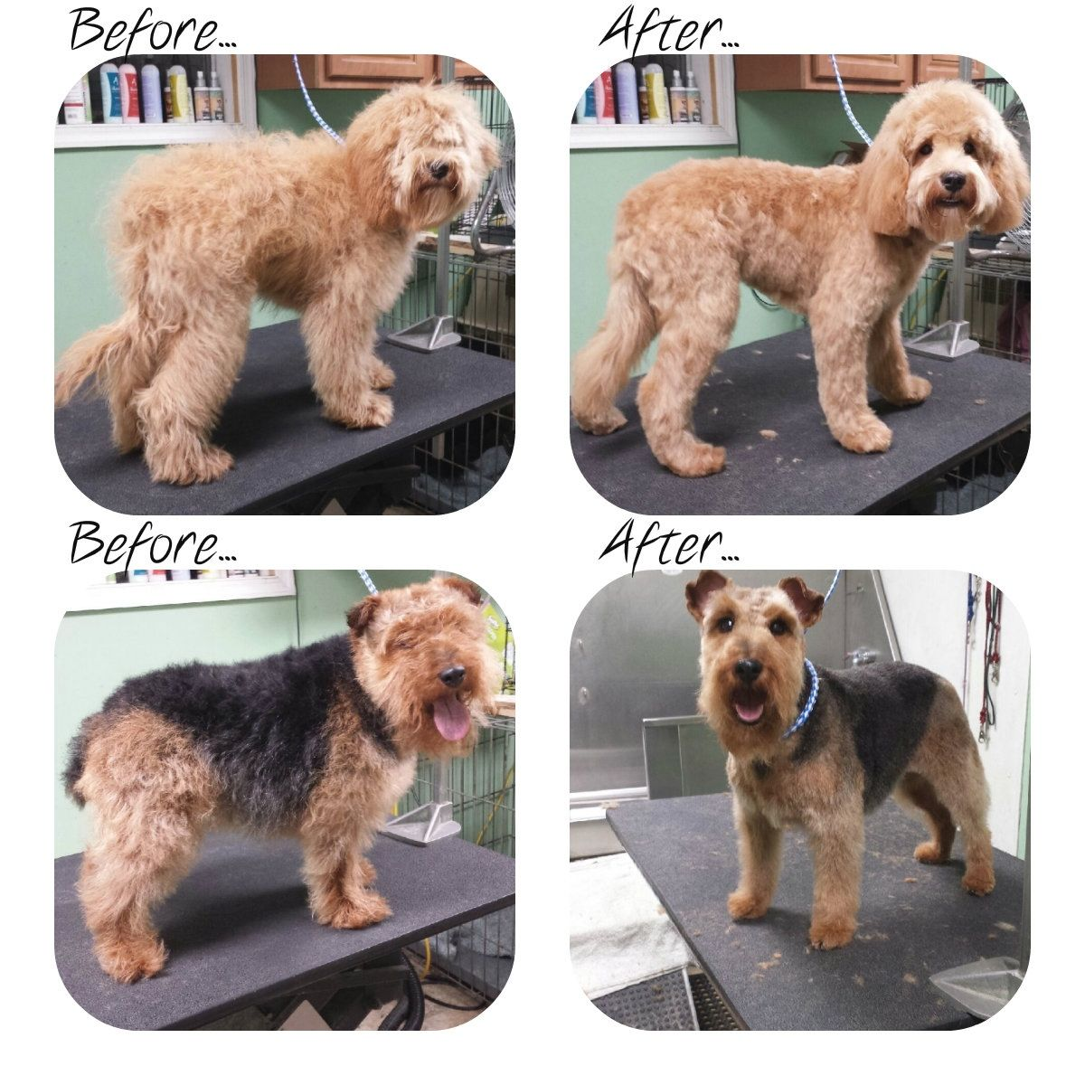Types Of Goldendoodle Haircuts Google Search Goldendoodle Haircuts Goldendoodle Dog Haircuts