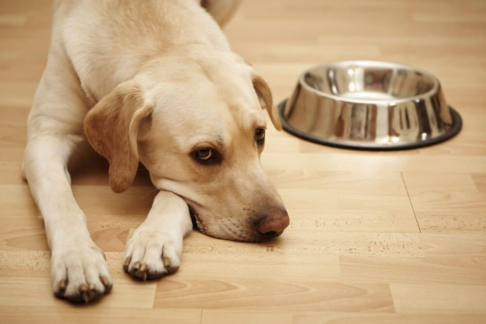 Diet For Dogs With Calcium Oxalate Bladder Stones Elmo S Kitchen