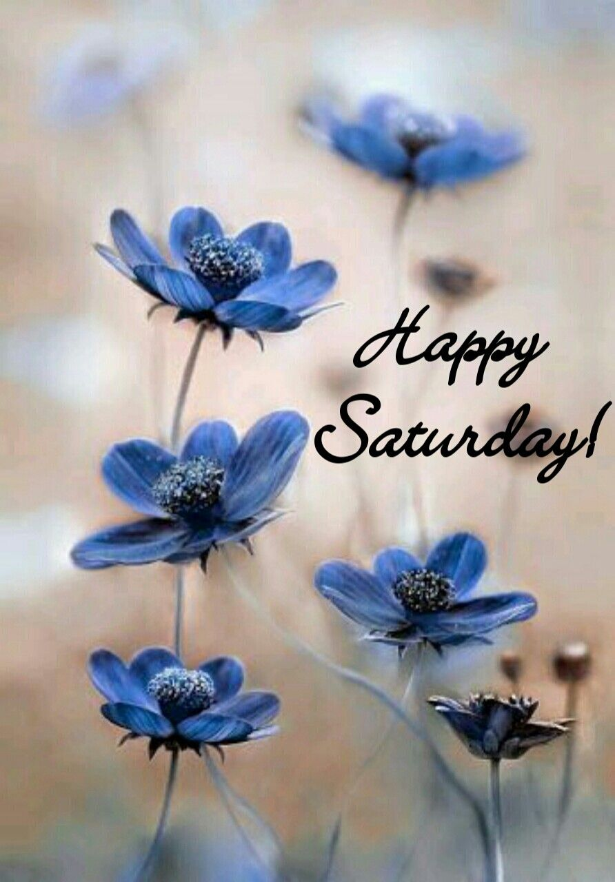 Good morning my beautiful girls happy saturday every day good morning my beautiful girls happy saturday cosmos flowers blue flower pictures izmirmasajfo