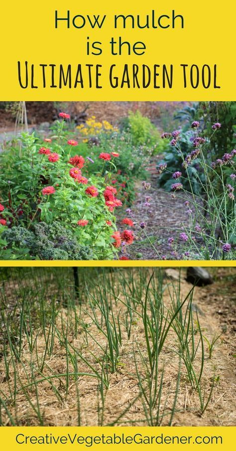 Vegetable garden mulch is the ultimate tool for creating a healthy ...