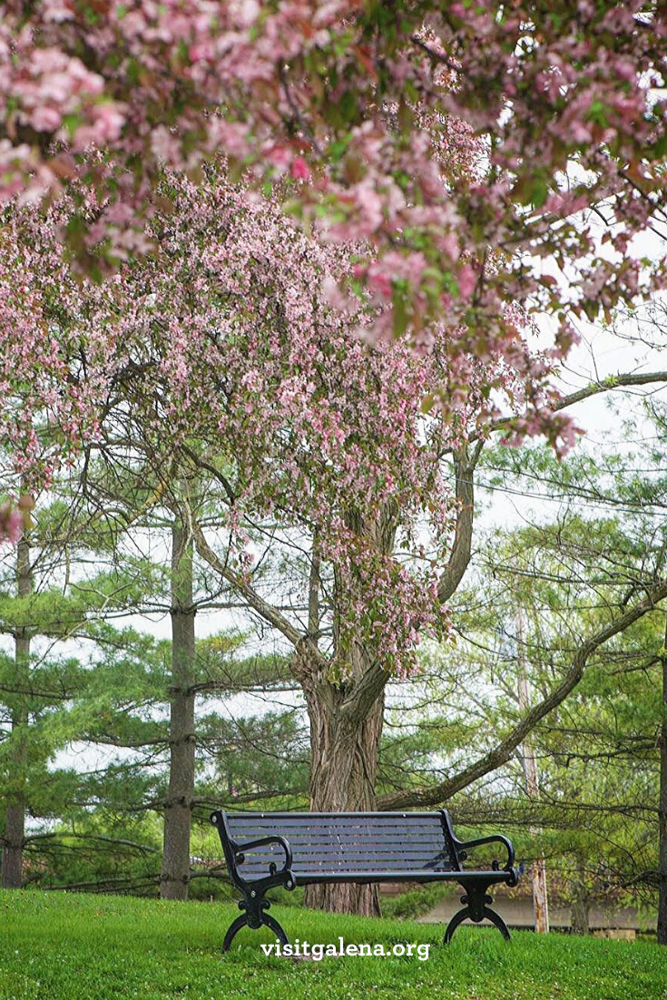 Spring Into Galenacountry Enjoyillinois In 2020 Spring Aesthetic Landscape Photography Beautiful Nature