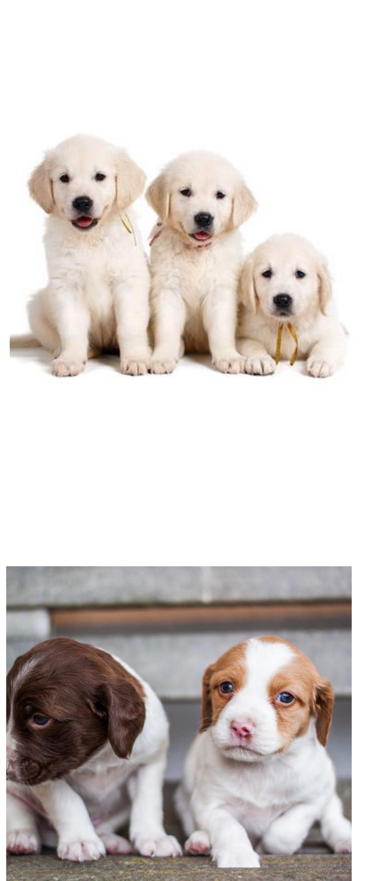 Free dog training videos. Dog training videos, Free dogs