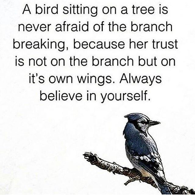 Wise Word From Bird Wise Words Quotes Bird Quotes Wise Words
