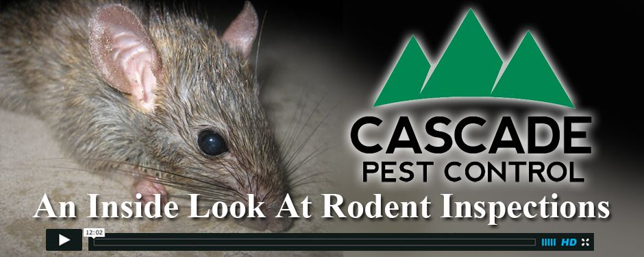 Are Rats Making A Mess Of Your Attic Or Crawlspace Cascade Pest Gets Rid Of Rats Mice Ants Spiders And Other Affordable Effective Pest Control Best