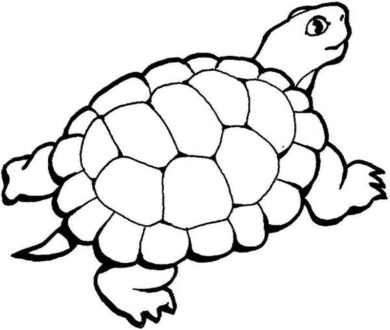 Images Turtle Coloring Pages Here Is A Coloring Page Of A Small
