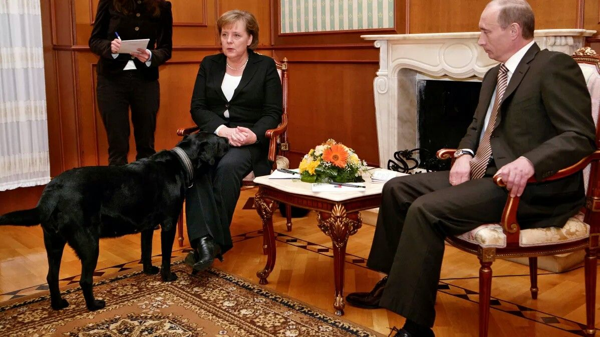 The Pig Putin And His Dog Angela Merkel Afraid Of Dogs The German Journalists Furious Dog Gifs Dogs Black Labrador Retriever