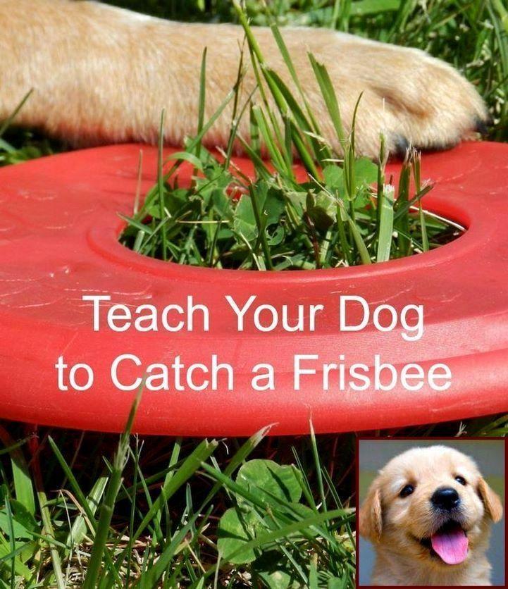 Potty Dog Training Potty Training A Pet Rabbit And Dog Training
