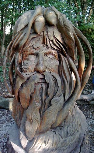 Camera phone picture tree carving wood and woods