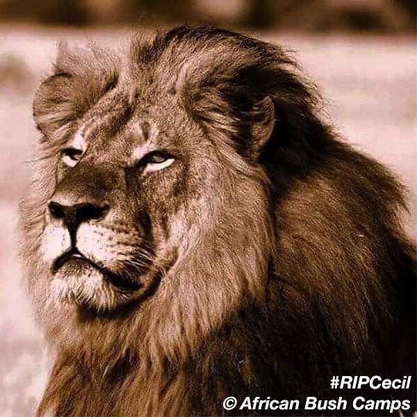 ป กพ นโดย Nithi ใน I Am Cecil Not A Trophy หน าอก