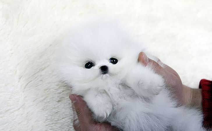 Top Pupies Chubby Adorable Dog - 5639472d29f2ba53e78141b4e306d804  HD_92914  .jpg