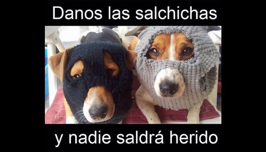 Memes Chistes Humor Funny Invequa Perro Perros Memes En Espanol Memes De Perros Memes Meme Gato Memes Perros Chistes De Perros